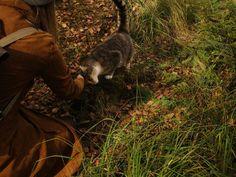 autumn coat and kitty