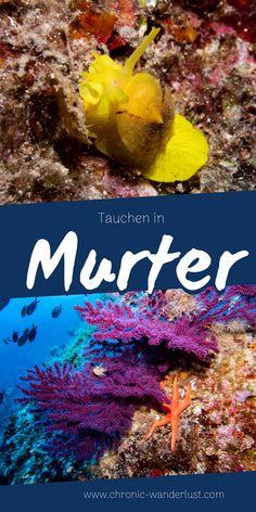 Tauchen in Murter und den Kornaten Rafting, Reisen In Europa, Croatia, Wanderlust, Around The Worlds, Restaurants, Bucket, Animals, Outdoor