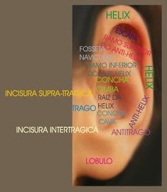 Espaço Adriana Martinez: MAPAS DE AURICULOTERAPIA Anti Helix, Reiki, Acupuncture, Circuit, Ear, Maps, Massage Tips, Traditional Chinese Medicine, Herbal Medicine