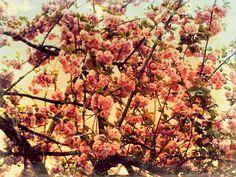 shabby chic bloom