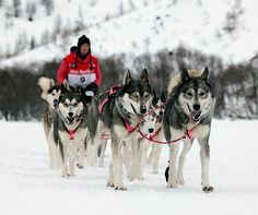 One of the world's most difficult dog sledding races http://www.aluxurytravelblog.com/2013/11/16/one-of-the-worlds-most-difficult-dog-sledding-races/