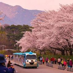 Learn Korean Online, Great Places, Places To See, Seoul Night, Korea Wallpaper, Han River, Flower Festival, National Cemetery, Romantic Scenes