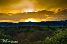 Pineapple fields, Nicaragua