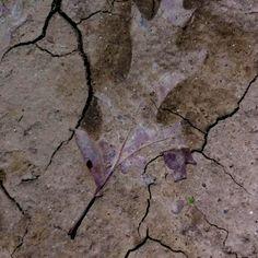 Leaf & dust