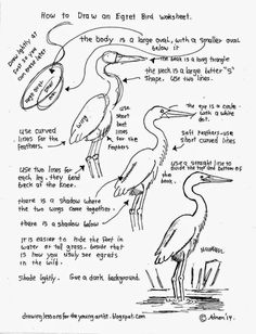 How To Draw An Egret Bird, Free Worksheet (How to Draw Worksheets for Young Artist) Bird Drawings, Easy Drawings, Animal Drawings, Pencil Drawings, Drawing Prompt, Drawing Lessons, Drawing Techniques, Learn To Draw, Bird Art