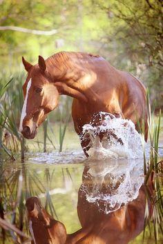 Bonita foto de un alazan en el agua.