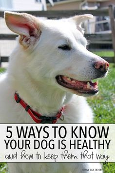 5 Signs of a Healthy Dog (and How To Keep Them That Way)