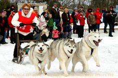 Cannington Dogsled Racing