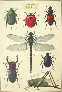 Florentine Print NH Seven Insects