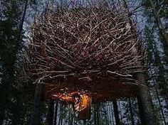 Bird nest design.
