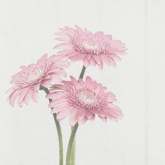 Kim Klassen {dot} Com - Kim Klassen dot Com - Texture Tuesday - Pretty inPink http://www.kimklassencafe.com/thecafe/texture-tuesday-pretty-in-pink.html