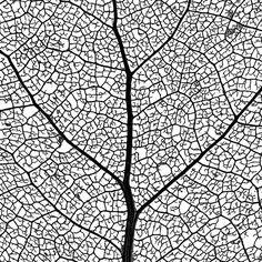 leaf skeleton network - macro photo - 4 of 4 (by ironrodart - royce bair)