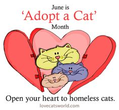 June is ADOPT A CAT month. Open your heart to homeless cats,