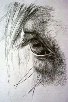 It's in their eyes…some of my favorite photos are the ones I take of a horses eye! Es ist in ihren Augen … einige meiner Lieblingsfotos sind die, die ich von einem Pferdeauge nehme! Pencil Drawings Of Animals, Horse Drawings, Animal Sketches, Drawing Sketches, Art Drawings, Drawing Ideas, Sketching, Horse Head Drawing, Horse Pencil Drawing