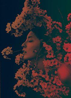 꽃, 사진 예술