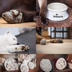 Always on your Side! Make it unforgettable! Cat Supplies, Pet Bowls, Ceramics, Pets, Instagram, How To Make, Ceramica, Pottery, Ceramic Art
