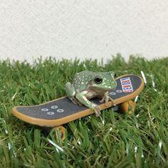 skater punk frog