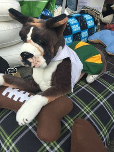 Dog cheerleader costume shop: Cheerleader dog costume, Cheerleader dog dress, football cheerleader dress for dogs Small Dog Costumes, Pet Halloween Costumes, Pet Costumes, Dog Halloween, Football Cheerleaders, Cheerleading, Cheerleader Costume, Dog Christmas Gifts, Dog Dresses