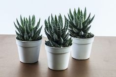 Begonia, Cinder Block Garden, Cactus Planta, Plantar, Green Life, Echeveria, Tropical Plants, Aloe Vera, Flora
