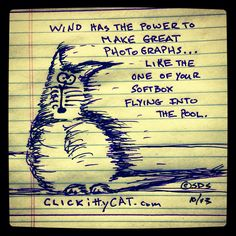 Wind has the power to make great photographs... Like the one of your softbox flying into the pool.   #CLICKittyCAT.com #cartoon by S. Dirk Schafer.