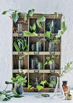 Indoor Gardening Research reveals that plants enhance wellbeing. Plus our top tips for caring for your indoor greenery. - Research reveals that plants enhance wellbeing. Plus our top tips for caring for your indoor greenery. Benefits Of Indoor Plants, Decoration Plante, Hanging Plants, Dream Garden, Plant Decor, Houseplants, Bonsai, Gardening Tips, Indoor Gardening