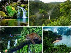 selva-amazonica-viajar