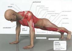 Push-up: quel poids soulevons-nous exactement? #amaporte #push up