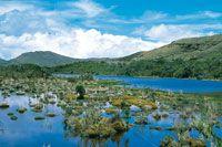 Hábitat de turberas con gramíneas y cortaderas en las lagunas del páramo de Sumapaz.