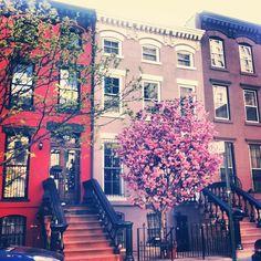 NYC Spring pink blossoming tree via Bergdorfs