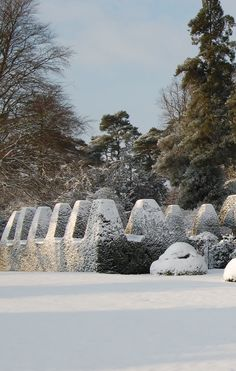 Nymans Gardens in winter, Sussex ... love the gradation up to tallest evergreen ... love the mix of evergreens