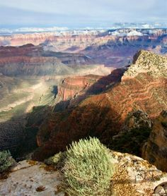 Artemisia in Grand Canyon. by pansy