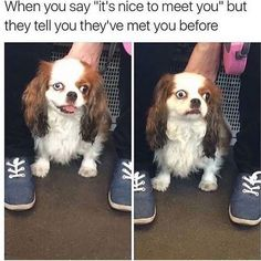 Animal Memes That Will Definitely Make You Smile - 9