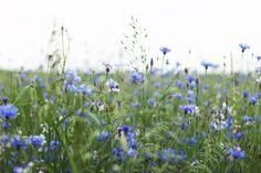 Chabry na obrockich polach Plants, Plant, Planets