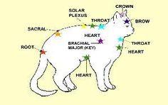 Cat_Chakras-298x188.jpg (298×188)