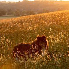 Angus midsummer dawn...