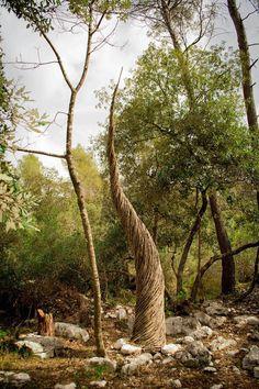 Bosques fantásticos por Spencer Byles