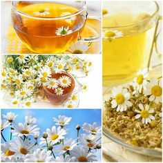 Chamomile new cure for cancer? See how to prepare