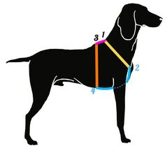 Führgeschirr_messanleitung in 4 Schritten~Als erstes wird der Halsumfang gemessen (gelbe Strecke ) ,anschließend  misst man dem Brustkorbumfang. Vom Brustkorb anfang bis zum Brustkorb ende. Als drittes wird der Taille-umfang gemessen ( orange Strecke ) ,indem man vom Rücken des Hundes bis zum Bauche misst. Zu Letzt  misst man die Rückenmaße  ( Pinke Strecke )