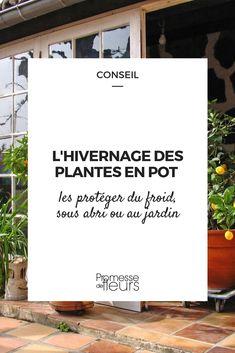 Certaines plantes ne sont pas assez rustiques pour supporter l'hiver, mieux vaut les installer en pot. Cette solution permet de faciliter la protection de ses plantes frileuses en hiver. Voici comment faire ! #jardin #jardinage #plante #exotique #fleur