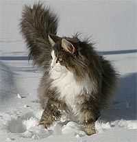 """""""It is with the approach of Winter wear their richest fur and assume an air of sumptuous and delightful opulence."""" --Peter Loti"""