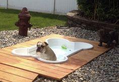 Cute Dog Pool