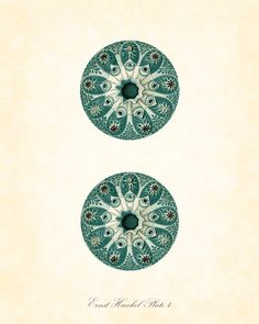 Vintage Ernst Haeckel Sea Life Series Plate 4  by BelleMerGraphics, $10.00