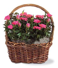 Present your love with this sweet rose basket that he or she can place by the window. The rose bushes can also be planted outside and last for years to come. <3 http://www.fromyouflowers.com/products/rose_garden_basket.htm?&refcode=pint