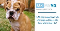 Ask petMD - Real Answers From Real Vets. | petMD