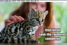 Itteh bitteh save-the-rainforest commeteh
