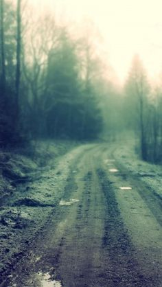 Forest Dirt Road #iphone #wallpaper