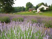 Lavender Hill Farm, Niles, Michigan