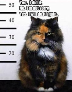 Cat in trouble with the law!