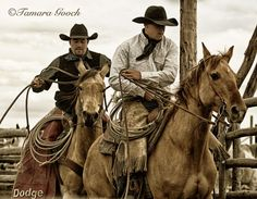 Working Cowboys Pictures | Working-Cowboys-Photo E4C3504