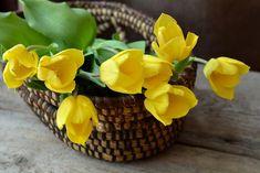 Basket of cut flowers - yellow tulips Yellow Rose Flower, Yellow Tulips, Tulips Flowers, Cut Flowers, Fresh Flowers, Colorful Flowers, Spring Flowers, Flower Colour, Orange Flowers